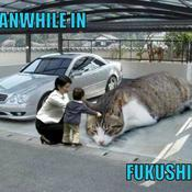Meanwhile in fukushima 9b1a11