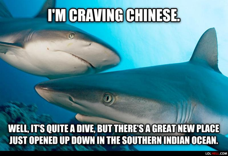 Images of Funny Shark Jokes - #rock-cafe