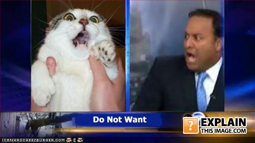 Funny pictures zomg cat local news
