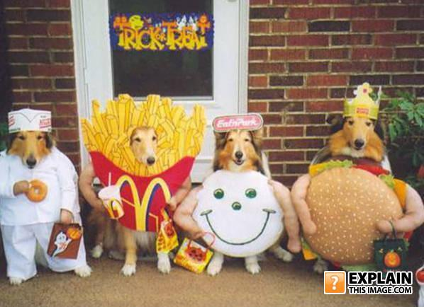 Funny pets halloween costumes dogs dressed up in fast food outfits