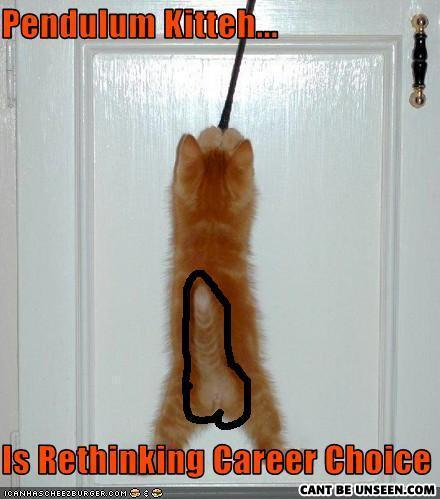 Funny pictures cat is pendulum