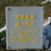Tender fragrant grass