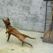 Doggy breakdance