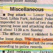 Duckrefused